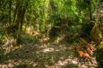 Ущелье Борьяна (Карану) | Boriana Gorge