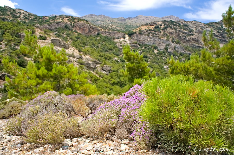 Водопад Милона (Kαταρράκτης του Μυλωνά, Milona Waterfall)